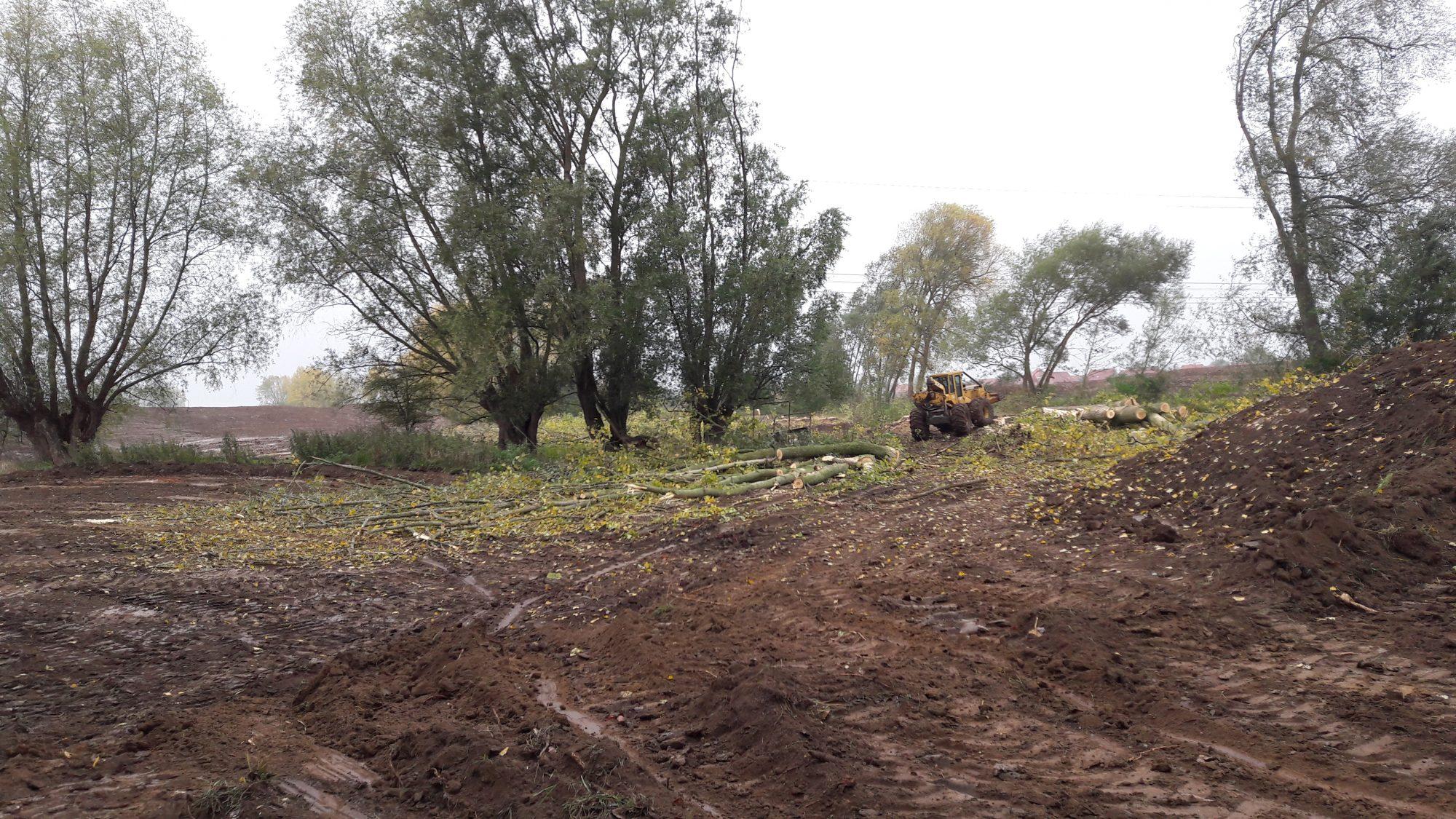 Les arbres de moindre intéret écologique abattus (peupliers)